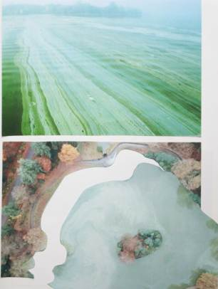 Images of Algae around the world